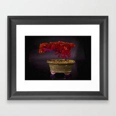 Red Bonsai Framed Art Print