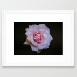 Rose_1 Framed Art Print