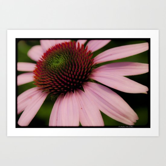 Pink Passion Art Print