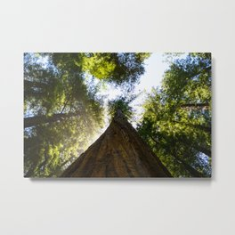 the forest for the tree Metal Print