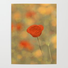 Poppy-Red+Bokeh Hearts Poster