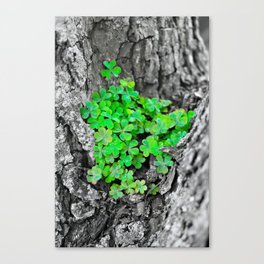 Clover Cluster Canvas Print