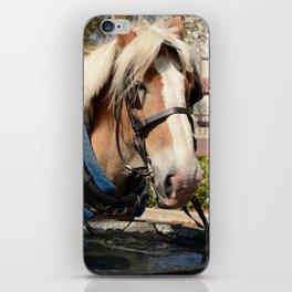 Carriage Horse iPhone Skin