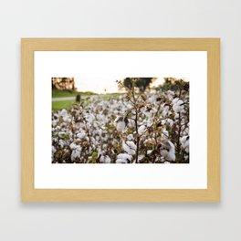 Cotton Field 3 Framed Art Print