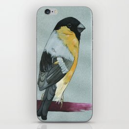 Bull Finch Watercolor iPhone Skin