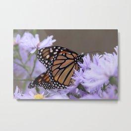 Monarch Beauty Metal Print