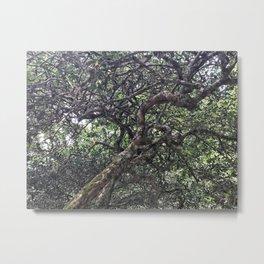 Tea Tree Metal Print