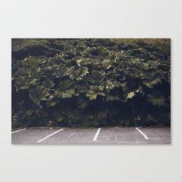 Rhubarb Stalks Canvas Print