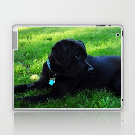 Angus Laptop & iPad Skin