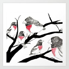 Grosbeak - sketch Art Print