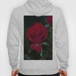 Miniature Rose Pearls Hoody