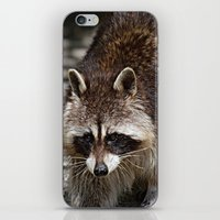 racoon iPhone & iPod Skins featuring Racoon by MehrFarbeimLeben