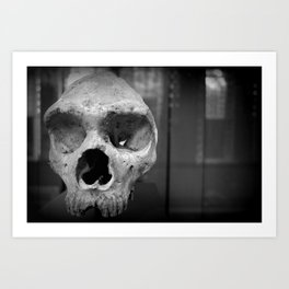 Neanderthal Skull, Natural History Museum, London, UK Art Print