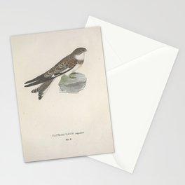 Sand colored Nighthawk caprimulgus rupestris Stationery Cards