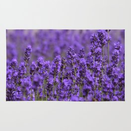 the smell of lavender -c- Rug