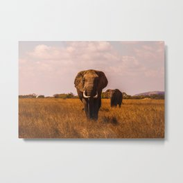 Elephant Safari (Color) Metal Print