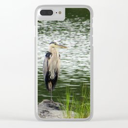 Great Blue Heron - Standing Stately Clear iPhone Case