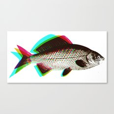 fish + fish + fish Canvas Print