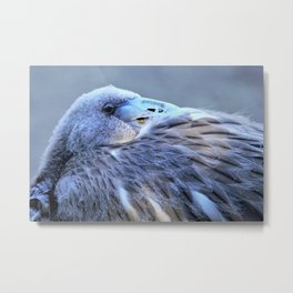 Young Flamingo Feathers Metal Print