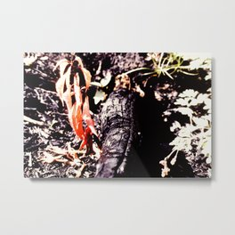 After the forest fire Metal Print