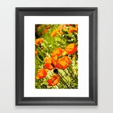 Poppy Field Framed Art Print