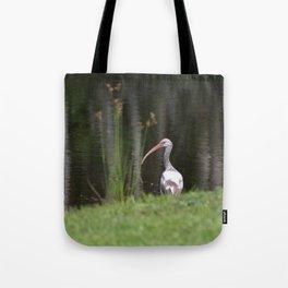 Immature White Ibis Tote Bag
