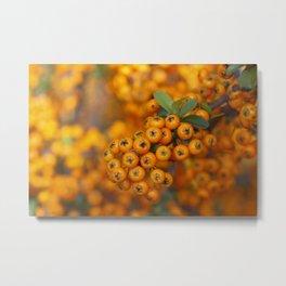 Fall berries in orange Metal Print