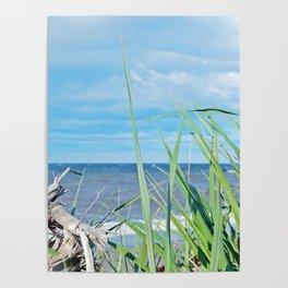 Through Grass and Driftwood Poster