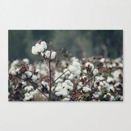 Cotton Field 5 Canvas Print