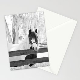 Gypsy Vanner Beauty Stationery Cards