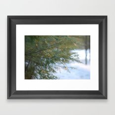 hemlock in a golden winter Framed Art Print