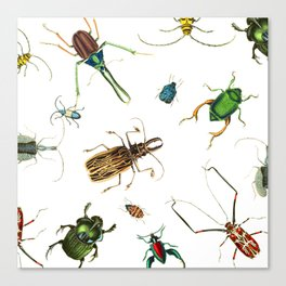 Bug Life - Beetles - Bugs - Insects - Colorful - Insect Pattern Canvas Print