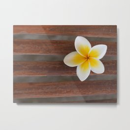 Frangipani Flower on bamboo wood Metal Print