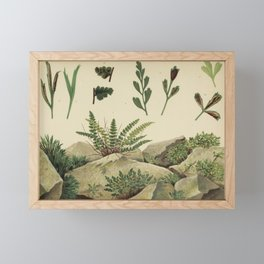 Rock Ferns Framed Mini Art Print