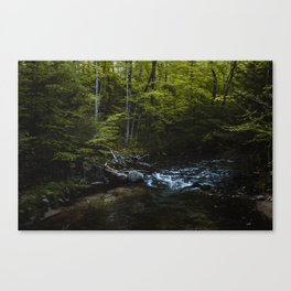Water Under Shade Canvas Print