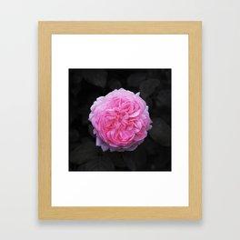 Flower (Beautiful) Framed Art Print