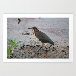 Bird walking on beach Art Print