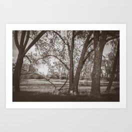 Cottonwoods at Lee's Farm, Sepia 2 Art Print