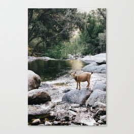 goat creek Canvas Print