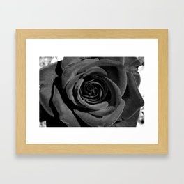 Classic Rose Framed Art Print
