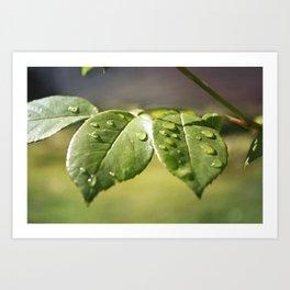 Fresh Dew Drops Art Print