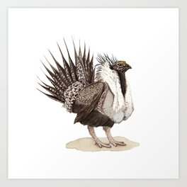 Greater Sage-Grouse Art Print