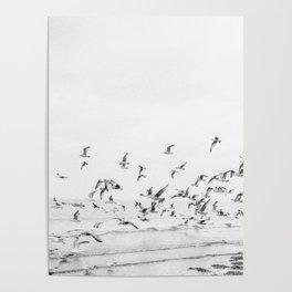"""Seagulls""   Coastal black and white photo   Film photography   Beach Poster"