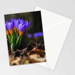 NATUR : Wildlife Stationery Cards