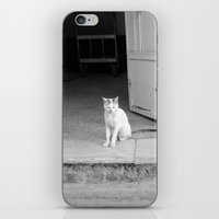 arab iPhone & iPod Skins featuring Arab kitty by Raleigh Tillman