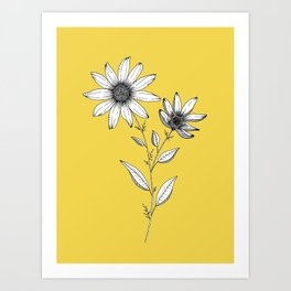 Wildflower line drawing | Botanical Art Art Print