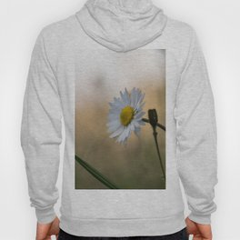 Sunset daisy flowers Hoody