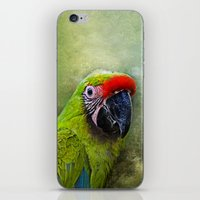 parrot iPhone & iPod Skins featuring parrot by lucyliu