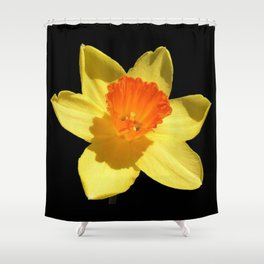 Spring Daffodil Isolated On Black Shower Curtain