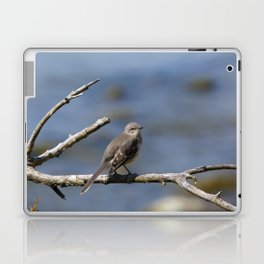 Northern Mockingbird Laptop & iPad Skin